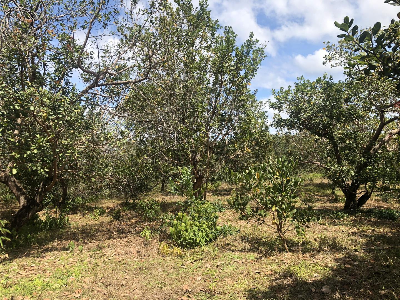 Bán gấp 4,7ha đất vườn điều giá 1.6 tỷ Lh 0366534667 image-thumb-0