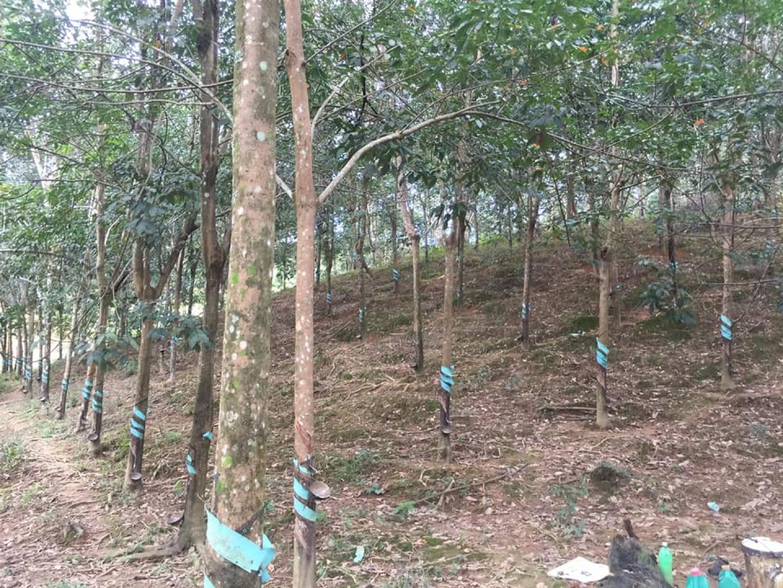 chuyển nhà cần bán  2,1 ha đất vườn rẫy giá 1,5 tỉ lh 0944330001 image-thumb-2