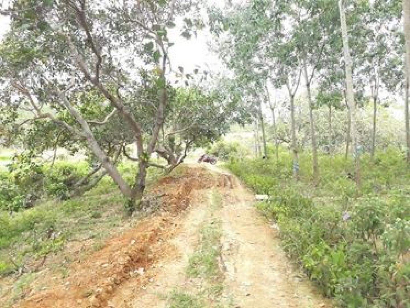 rẫy điều gần thị trấn Đức Phong 1ha5 giá 750 triệu LH 0846999943